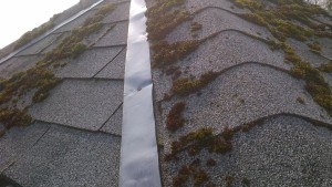 moss growing on a roof despite zinc strips